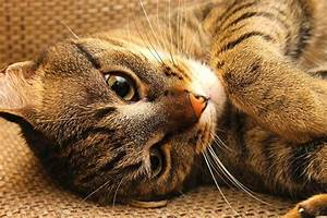 Katzen Fernhalten Von Möbeln : diese katze hat eine ungew hnliche leidenschaft ~ Sanjose-hotels-ca.com Haus und Dekorationen