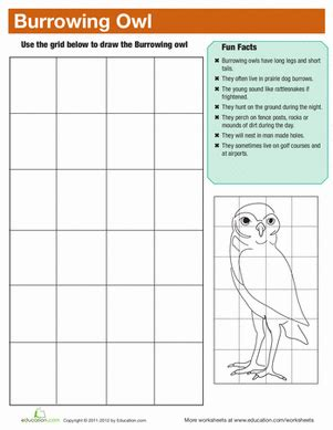 burrowing owl facts worksheet education