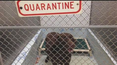 vet   set  rabies quarantine rules  hawaii