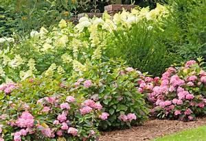 Hortensien überwintern Im Garten : hortensienbeet so legen sie es richtig an ~ Frokenaadalensverden.com Haus und Dekorationen