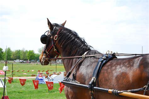 sleigh harness harness