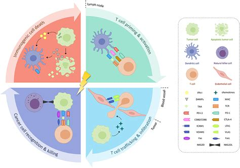 frontiers   combination  immunotherapy