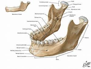 Facial Fractures  Facial Trauma  Facial Reconstruction  July 2010
