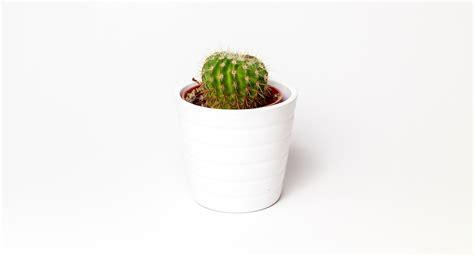 green cactus potted plant  white ceramic pot