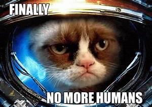 Silliest Memes of Grumpy Cat | Monmonkun