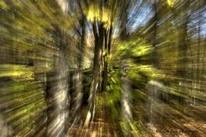 zoom effect | Edith Levy Photography