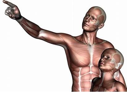 Son Father 3d Boy Anatomy Jooinn Child