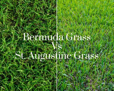 What Is The Difference Between Bermuda Grass And St
