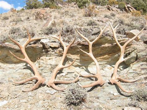 Elk Shed Utah by Big Elk Sheds Monstermuleys