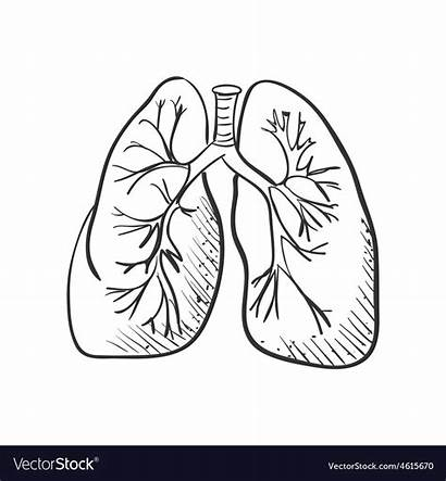Lungs Drawing Doodle Medical Background Vector Lung