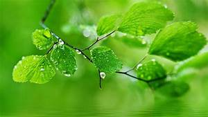 FreeWall water drops on leaves wallpapers