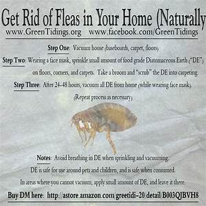 how to rid of fleas in your house