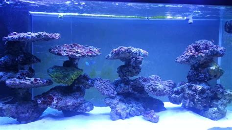 Saltwater Aquarium Aquascape by Reef Tank Aquascaping On Pvc