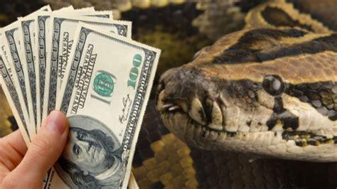Snake Swallows N36m Cash In Jamb Office Makurdi, Benue
