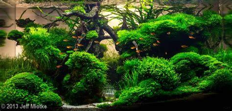 Aquascape Moss by 5704 Best Images About Planted Aquarium On