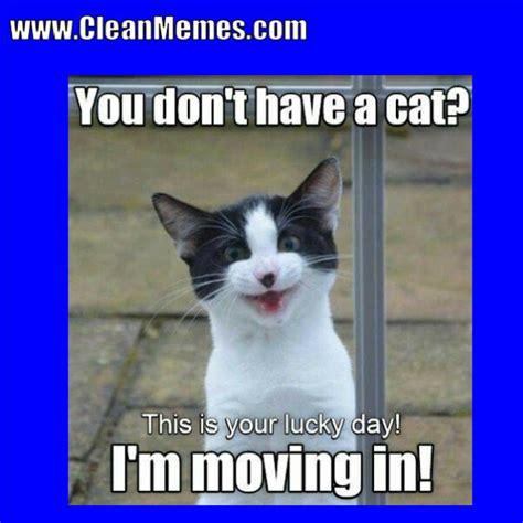 Posts about cat memes written by cleanmemes. Pin by Clean Memes on Clean Memes | Cat memes clean, Funny cat memes, Cat memes