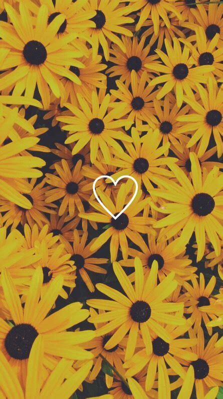 Aesthetic Yellow Flowers Wallpaper Iphone by Wallpaper Flowers Yellow Iphonewallpaper