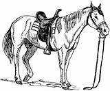 Coloring Pages Horses Horse sketch template