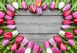 Love Heart of Tulips Designer Splashback Cameo Glass