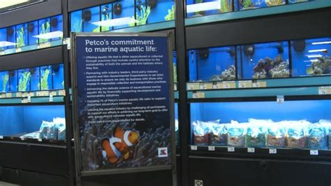 wave  change  saltwater fish sold  pet stores