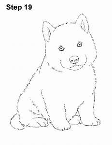 The Gallery For U0026gt Husky Puppy Sketch