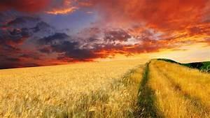 Endless wheat field at sunset wallpaper   AllWallpaper.in ...