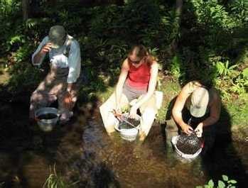 biomonitoring river stream macroinvertebrates
