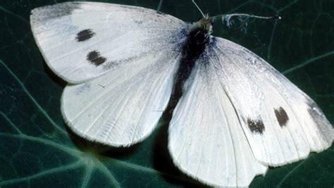 butterfly garden nz stuff moist trick save numbers summer