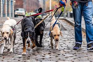how to choose the best dog walker figo pet insurance With best dog walking websites