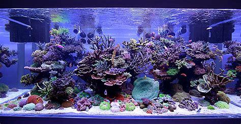 aquarium eau de mer petit volume