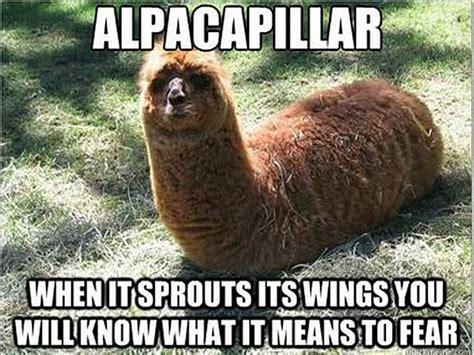 Alpaca Meme - 10 alpacalypse memes to make you very nervous