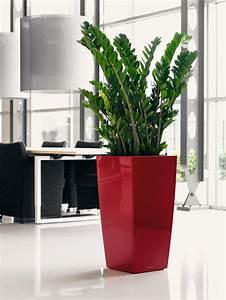 Arbuste D Intérieur : jardins bleus plantes d 39 int rieur ~ Premium-room.com Idées de Décoration