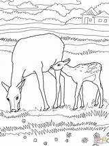 Elk Coloring Pages Bull Mother Printable Animals Mountain Rocky Drawing Wapiti Template Supercoloring Sheep Games Coloringhome Categories sketch template