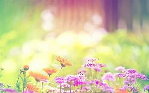 Wallpapers Summer Flowers - Wallpaper Cave