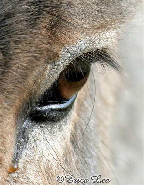 Farm Animals Donkey