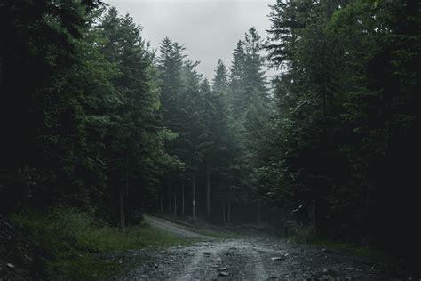 Wallpaper~ random wallpapers (33700418) fanpop. Free stock photo of dark, dark green, forest
