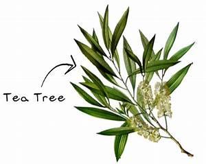 Tea tree gezichtsverzorging