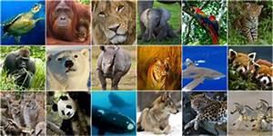 Mehrere Bilder In Einem : die rote liste bedrohter tier und pflanzenarten wwf ~ Watch28wear.com Haus und Dekorationen
