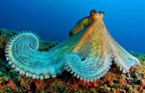 Ocean Animal Encyclopedia Oceana Eu
