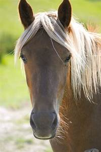 Horse Head Profile | Flickr - Photo Sharing!