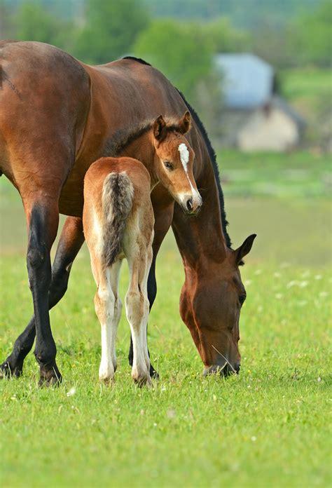 horse feed tips clifton choosing feeds horses need