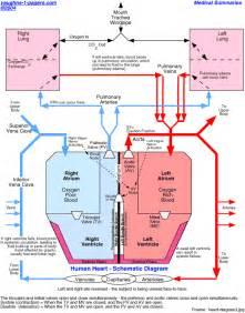 Human Heart Blood Flow Diagram