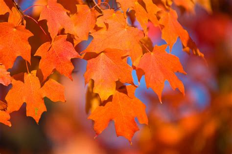 Image Gallery A Rainbow of Fall Leaves  Colors of Autumn