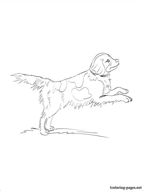 english water spaniel coloring page coloring pages