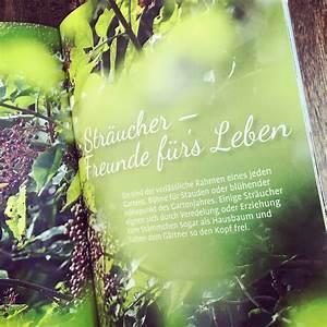 Heimische Pflanzen Für Den Garten : gartenblick gartenfotografie heimische pflanzen f r den ~ Michelbontemps.com Haus und Dekorationen