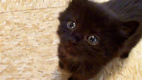 Cute Kitten Fails