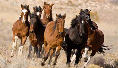 wild horses poetry  west daily reader