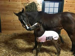 Foal Patrol  Comme Chez Soi Delivers Filly By Malibu Moon At Old Tavern Farm