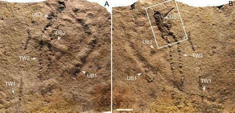 scientists    oldest animal footprints