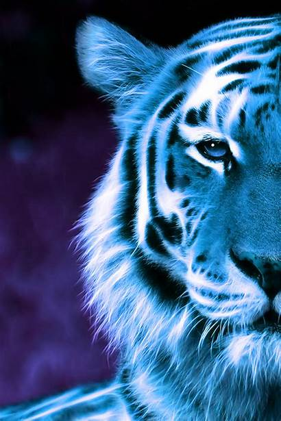 Tiger Mobile Wallpapers Ultra Style2 Background Midnight